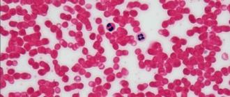 гемоглобин в эритроцитах